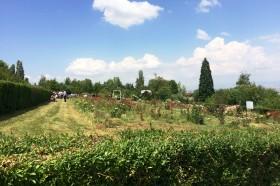 Сватба в Университетска Ботаническа Градина – София – 25.06.2016г.